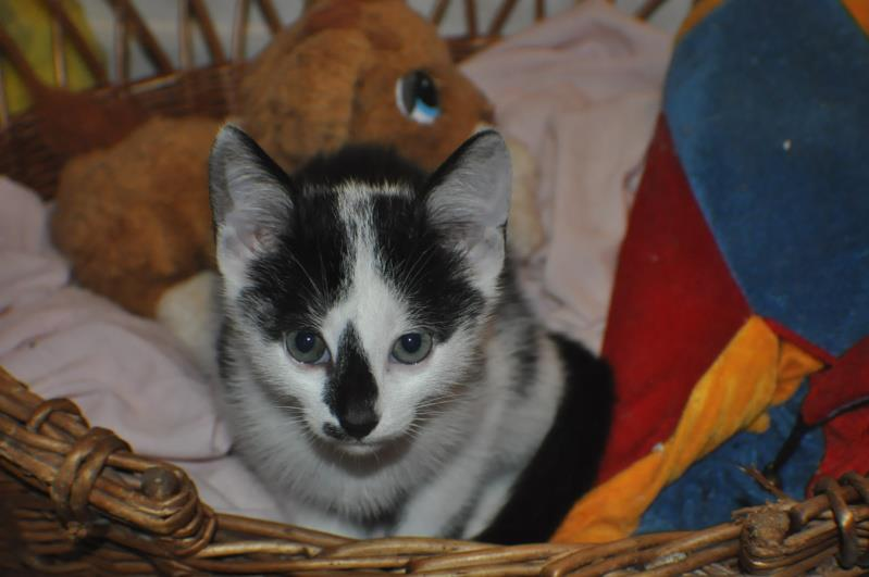 Chatons a adopter Ilky10