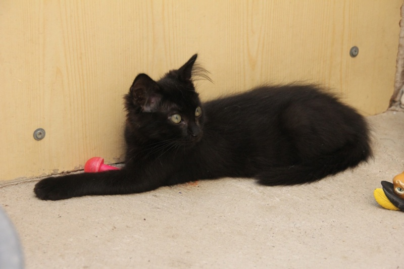 Chatons a adopter Indi10