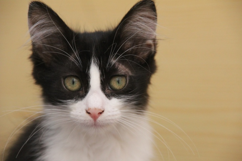 Chatons a adopter Indra10