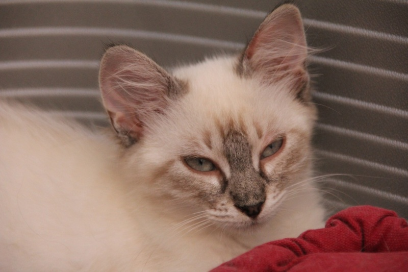 Chatons a adopter Isola10