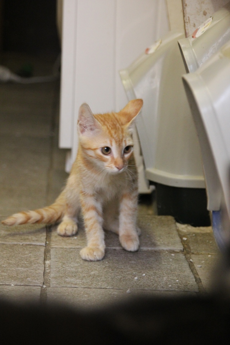 Chatons a adopter Ivoire10