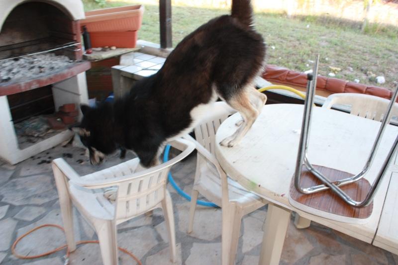 Washo (de son adoption à aujourd'hui) 20100813