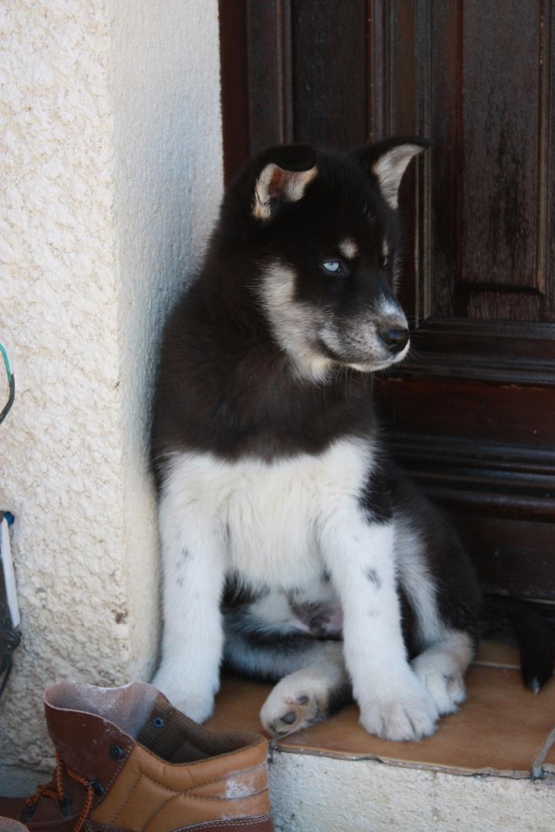 Washo (de son adoption à aujourd'hui) Img_7012