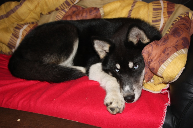 Washo (de son adoption à aujourd'hui) Img_8210