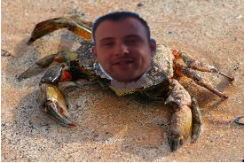 ATTENTION, gros crabe poilu Sans-t10