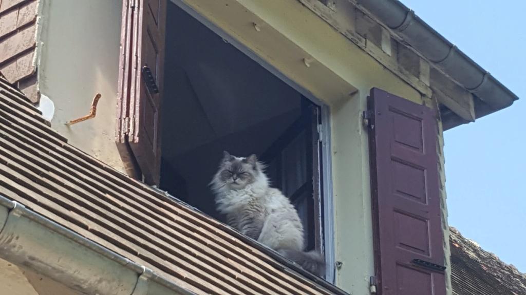 Le chat du Winger - Page 2 20180510