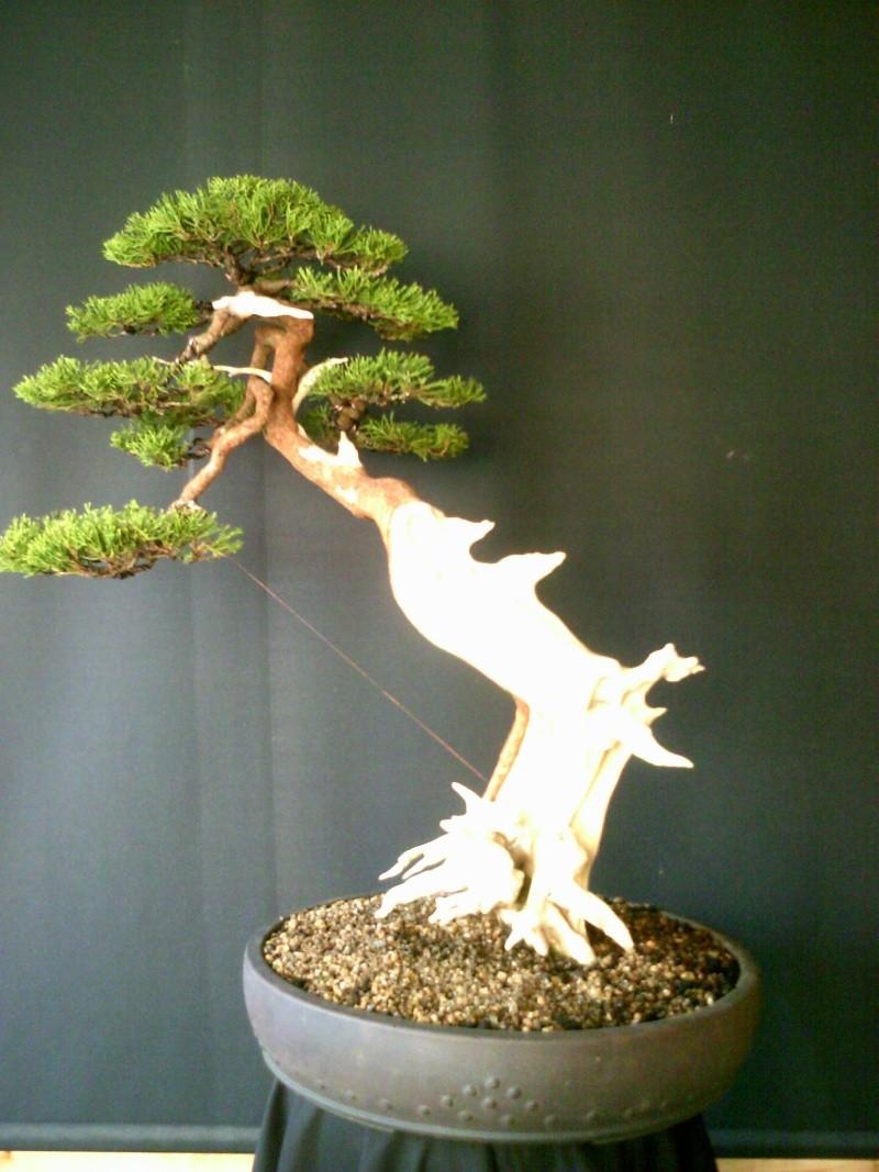 stolen trees Junipe19