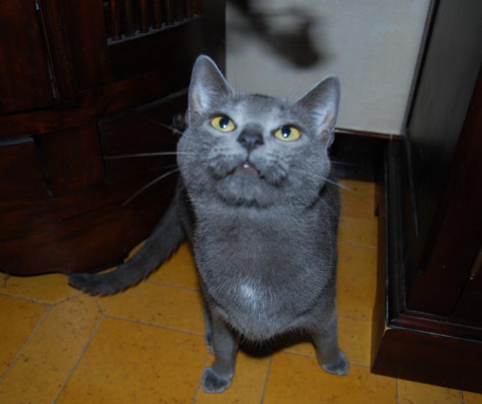 presentation des chats et de Osiris et cassiopee Cassio11
