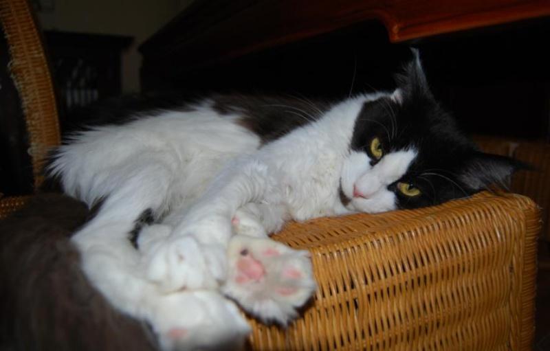 presentation des chats et de Osiris et cassiopee Eclips13