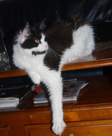 presentation des chats et de Osiris et cassiopee Eclips14
