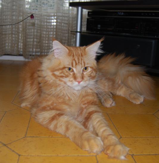presentation des chats et de Osiris et cassiopee Elliot15