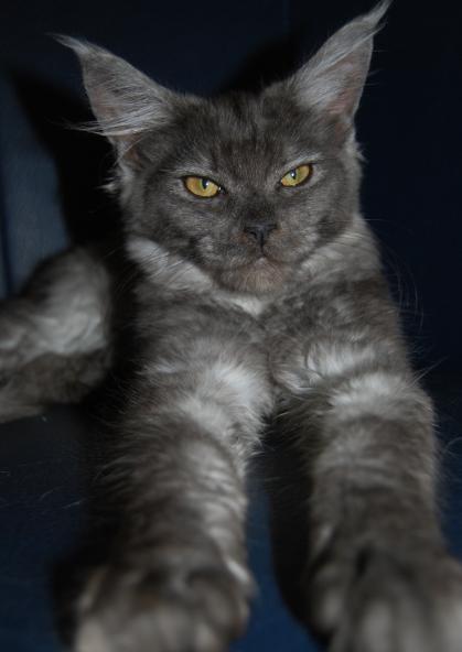 presentation des chats et de Osiris et cassiopee Fan-fa13