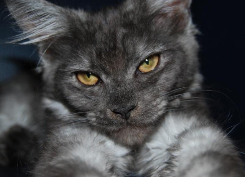 presentation des chats et de Osiris et cassiopee Fan-fa14