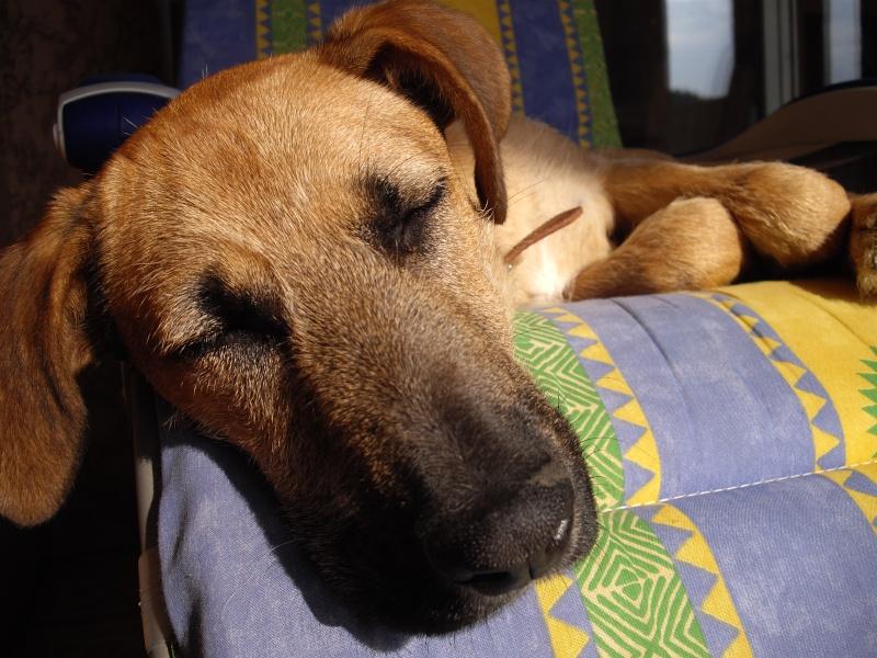 Confort d'été (27 juin 2010) Molier11