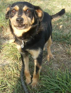PACO, adorable petit x terrier, 5 ans env. Dscf7111
