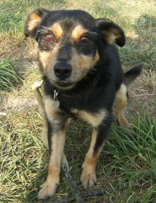 PACO, adorable petit x terrier, 5 ans env. Dscf7112