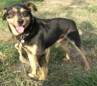 PACO, adorable petit x terrier, 5 ans env. Dscf7113