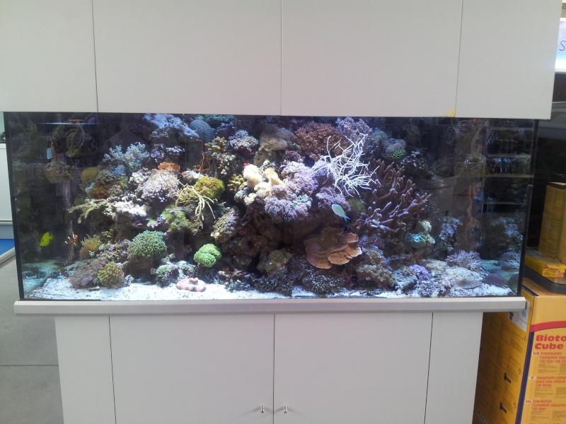 Sortie association au poisson d or 20120823