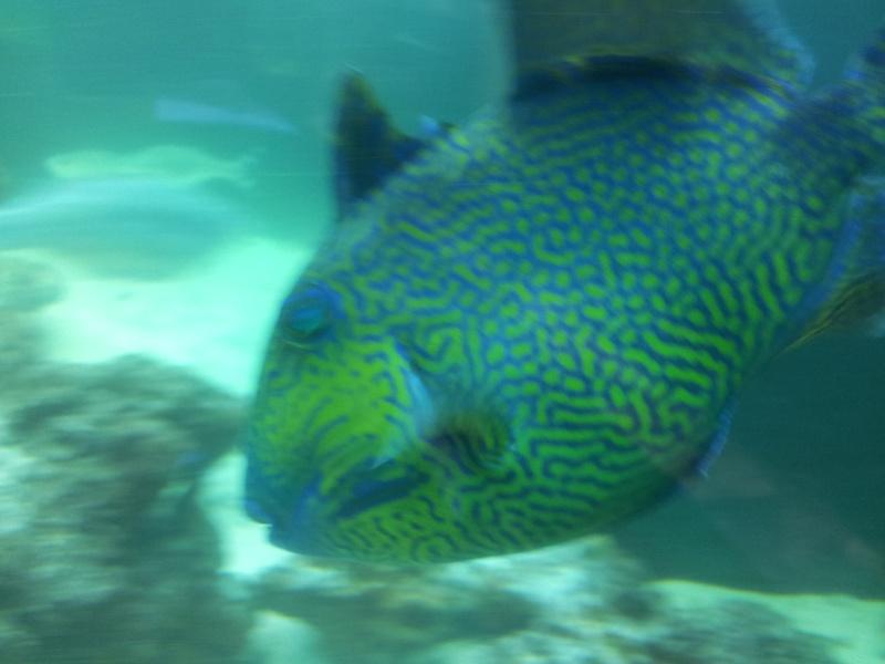 Sortie association au poisson d or 20120827