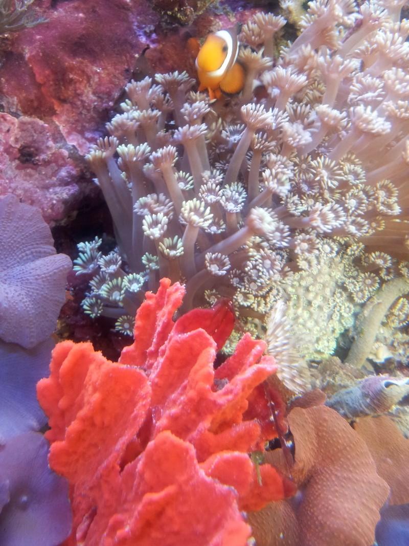 Sortie association au poisson d or 20120835