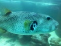 Sortie association au poisson d or 20120828