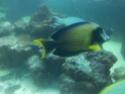 Sortie association au poisson d or 20120829