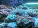 Sortie association au poisson d or 20120834