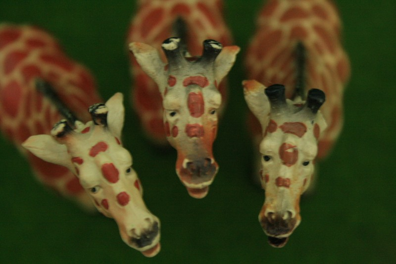 My first CollectA animals: the Beautiful Five 00211