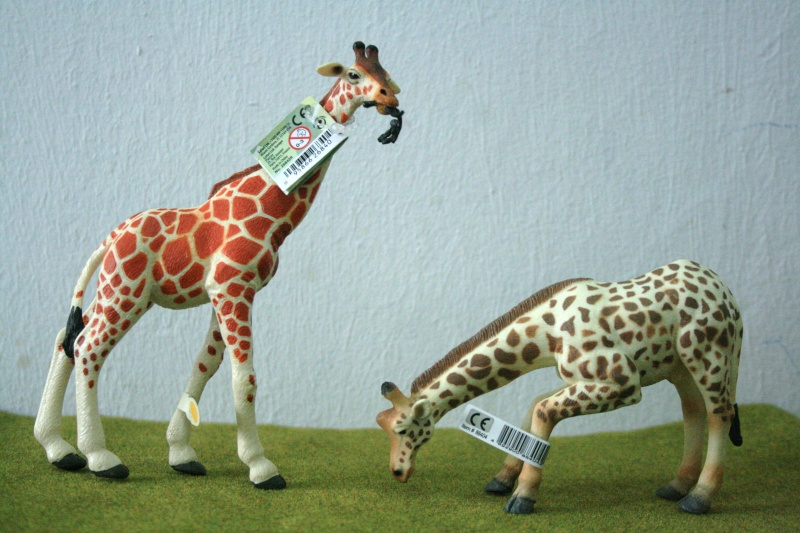 My first CollectA animals: the Beautiful Five 03410