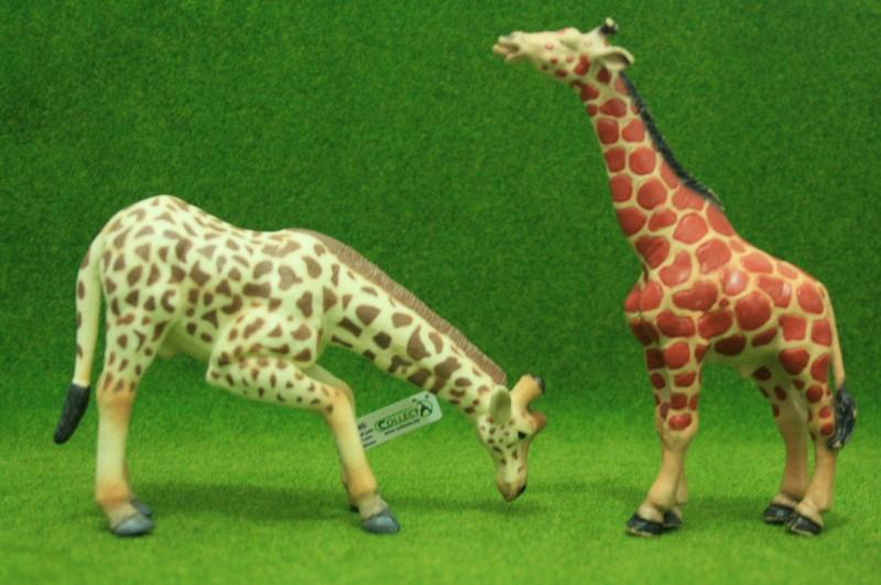 My first CollectA animals: the Beautiful Five Giraff11