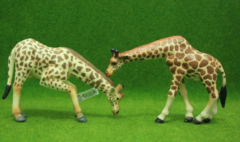 My first CollectA animals: the Beautiful Five Giraff12