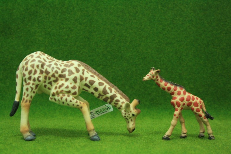 My first CollectA animals: the Beautiful Five Giraff13