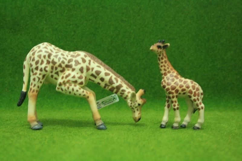 My first CollectA animals: the Beautiful Five Giraff14