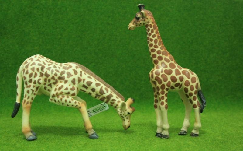 My first CollectA animals: the Beautiful Five Giraff15