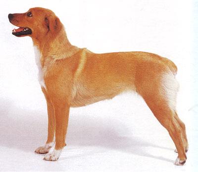 Поиграем в породы собак 14ea5f10