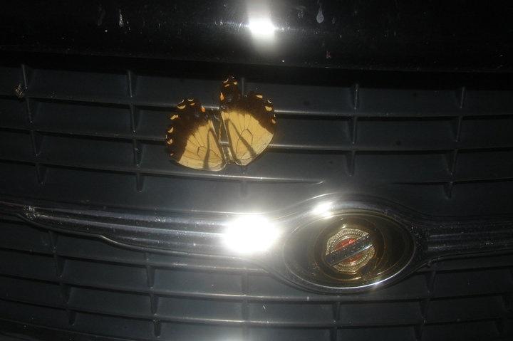 My Butterfly Karma 4_bmp10