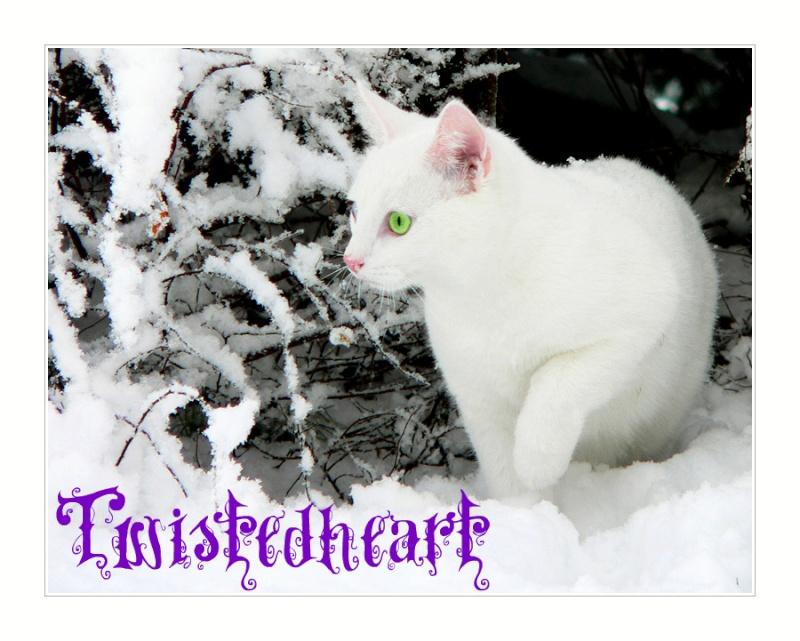 Twistedheart's cat creation Twistp11