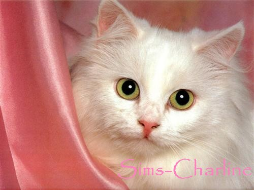 [Créations diverses] Sims-Charline Chat-b10
