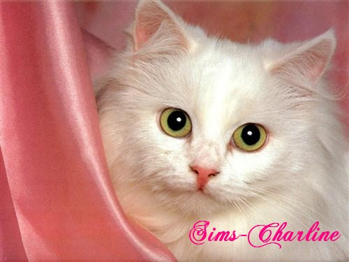 [Créations diverses] Sims-Charline Chat-b12