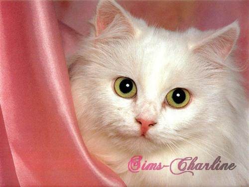 [Créations diverses] Sims-Charline Chat-b13