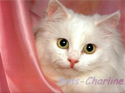 [Créations diverses] Sims-Charline Chat-b14