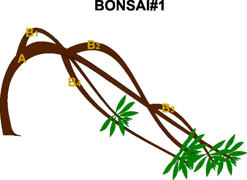 Expert Suggestion For My Cascade Bonsai Rcasca12
