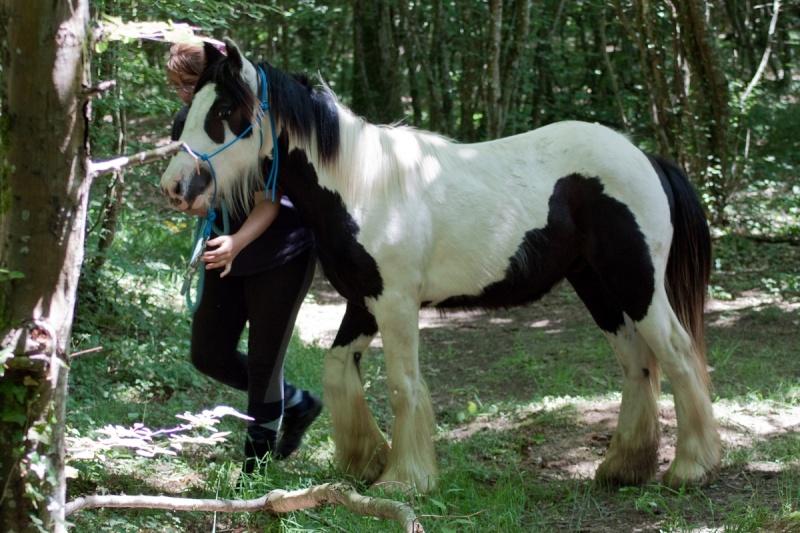 natural horsemanship Ain_1310