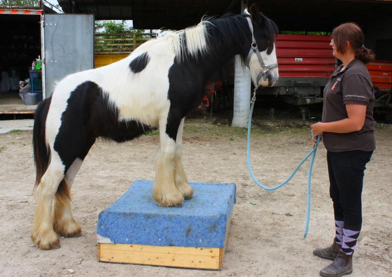 natural horsemanship Img_8510