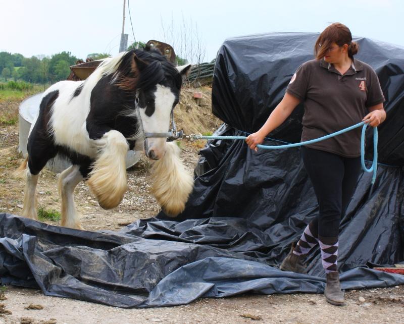 natural horsemanship Img_8610