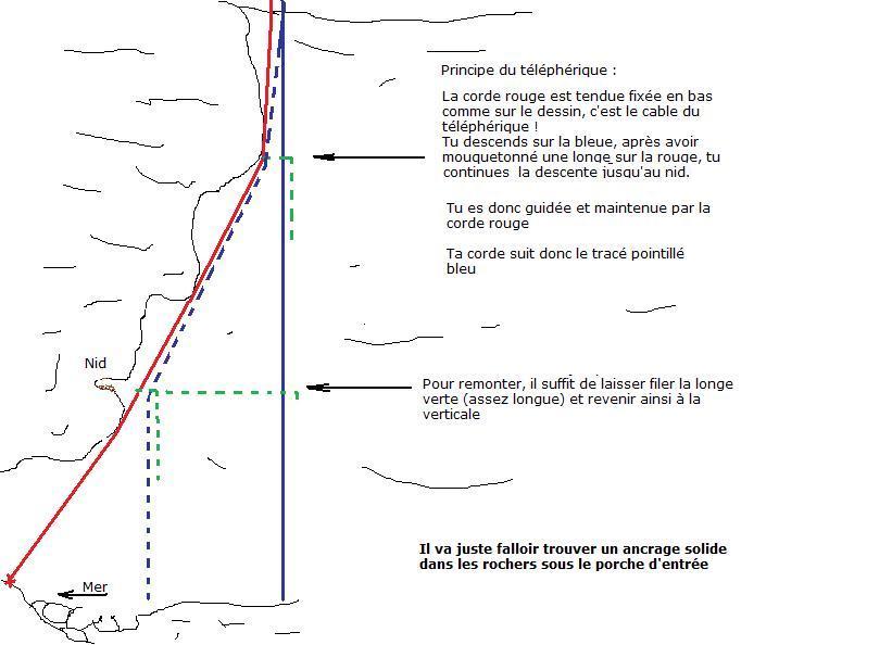 Suivi 2011 du Crave à bec rouge (Pyrrhocorax pyrrhocorax) en Bretagne Le_tou10