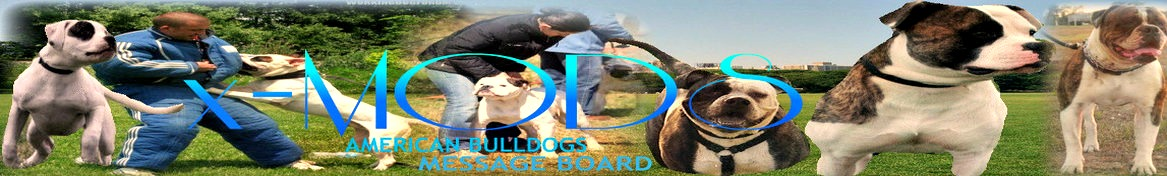 AMERICAN BULLDOGS  MESSAGE BOARD