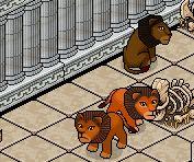 Les lions en provenance de l'afrique 10082510