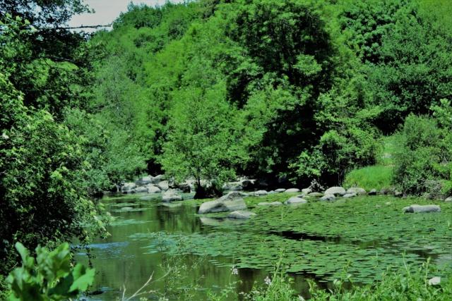 Chaillé-Sous-les-Ormaux (Vendée / 85). Img_4213