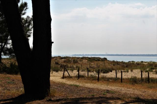 Île d'Oléron (Charente-Maritime - 17). Img_5813